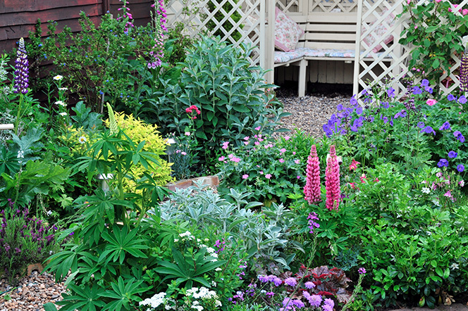 Garden Flowers with narrow path to seating area
